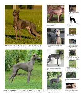 geras pedigree sheilai